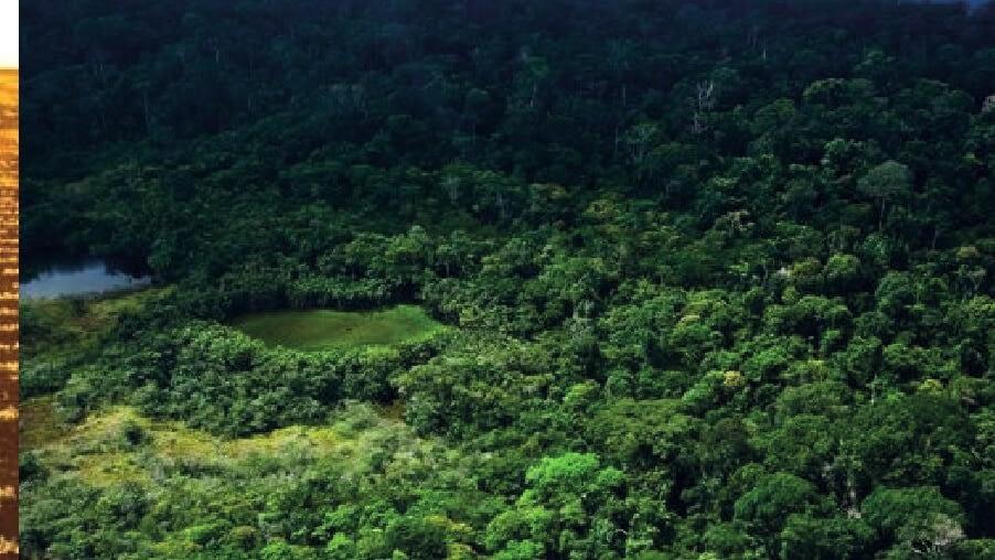 Exportações floresta